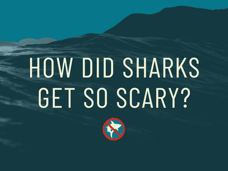 How Did Sharks Get So Scary?