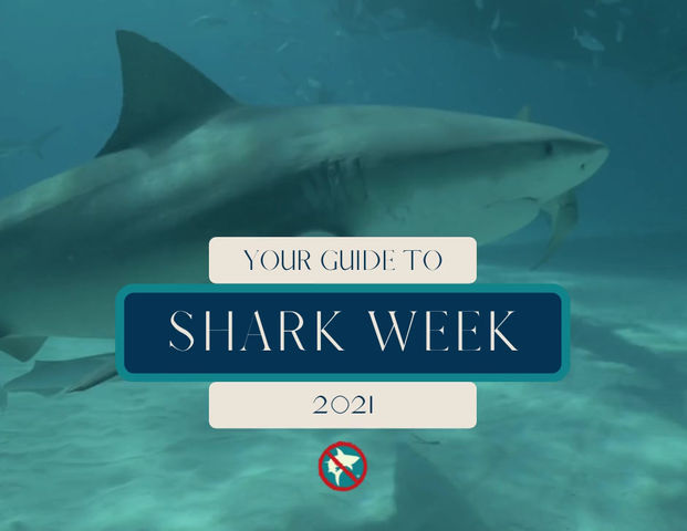 Your Guide to Shark Week 2021