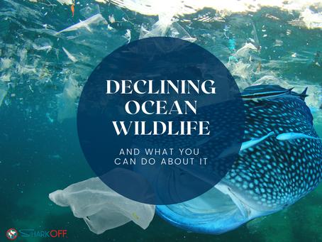 Declining Ocean Wildlife