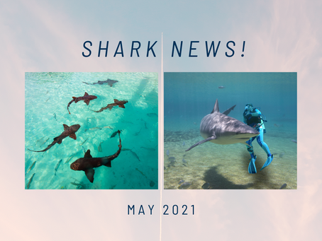 May Shark News!