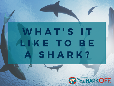 What's it like to be a shark?