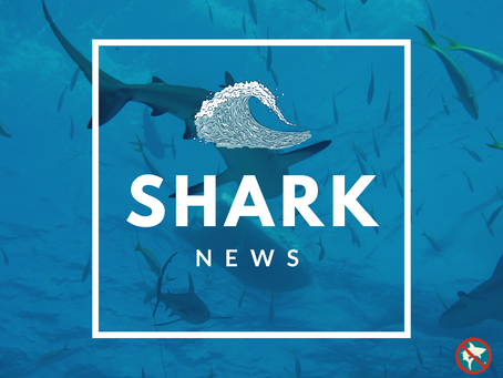 June Shark News!