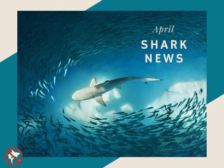 April Shark News!
