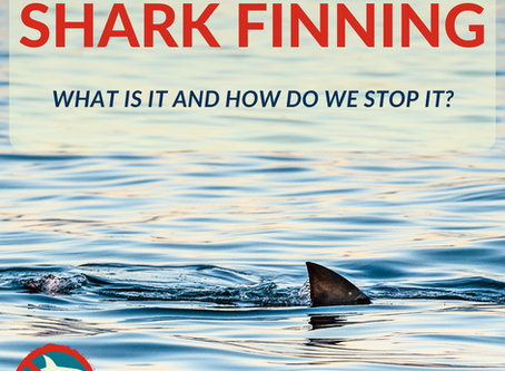 Shark Finning: A Horrendous Trade
