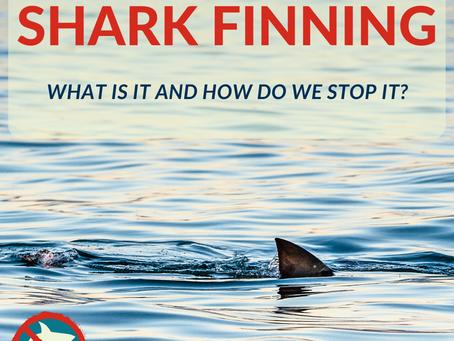 Shark Finning: A Horrendous Trade