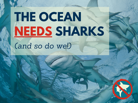 The Ocean Needs Sharks! (and so do we)