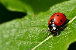ladybug-5279651 jggrz.jpg