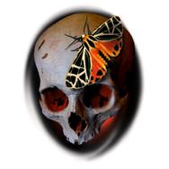 Skull and Moth