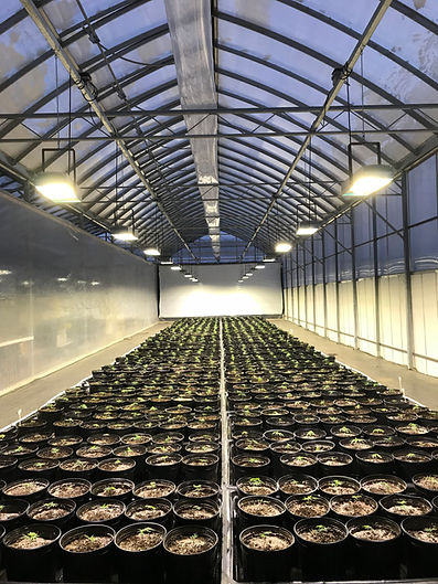 Greenhouse LED Grow Lighting