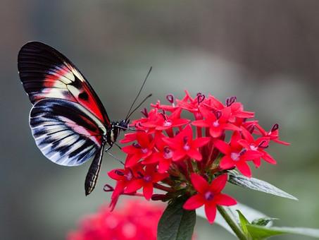 La Mariposa Debe Volar Con Sus Propias Alas