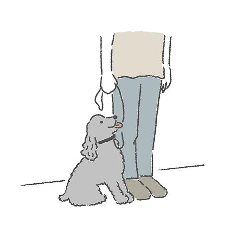 犬のしつけ 成犬トレーニング