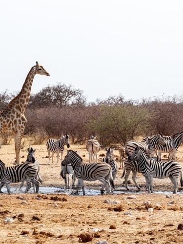NAMIBIA data in programmazione