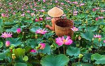 Lotus_modifié.jpg