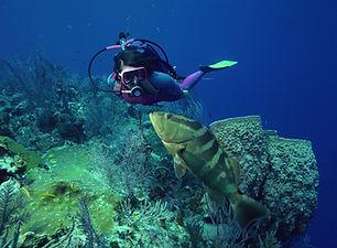 Dykning med fisk