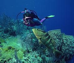 Mergulho com peixes