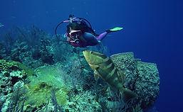 Plongée sous-marine avec des poissons