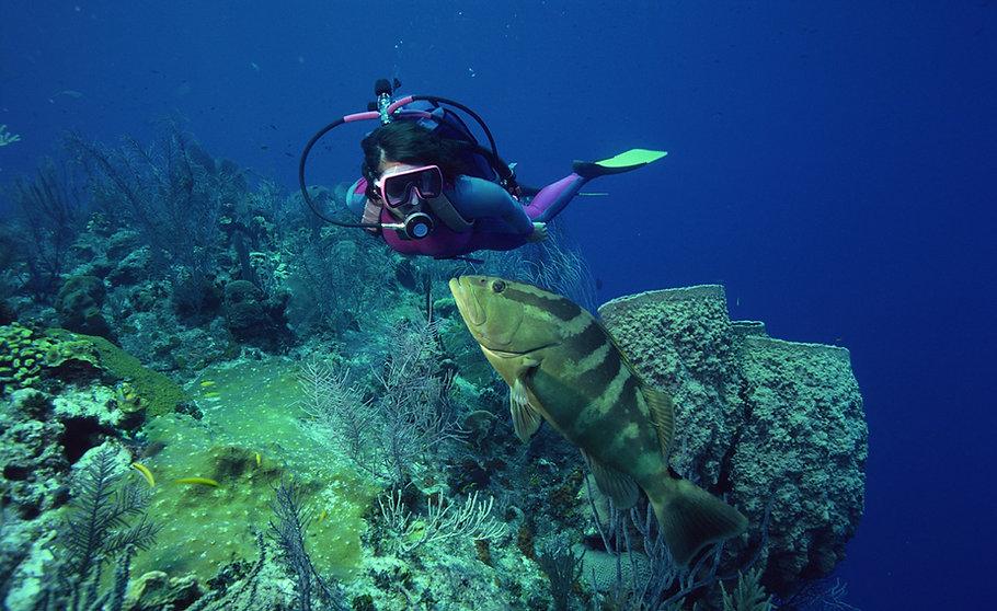 魚とダイビング