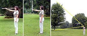 TreeMeasureLady.jpg