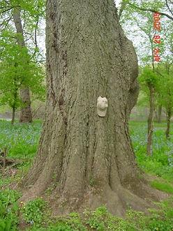 TreeMeasureLeft.jpg