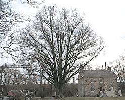 bt-2073-willow-oak.png