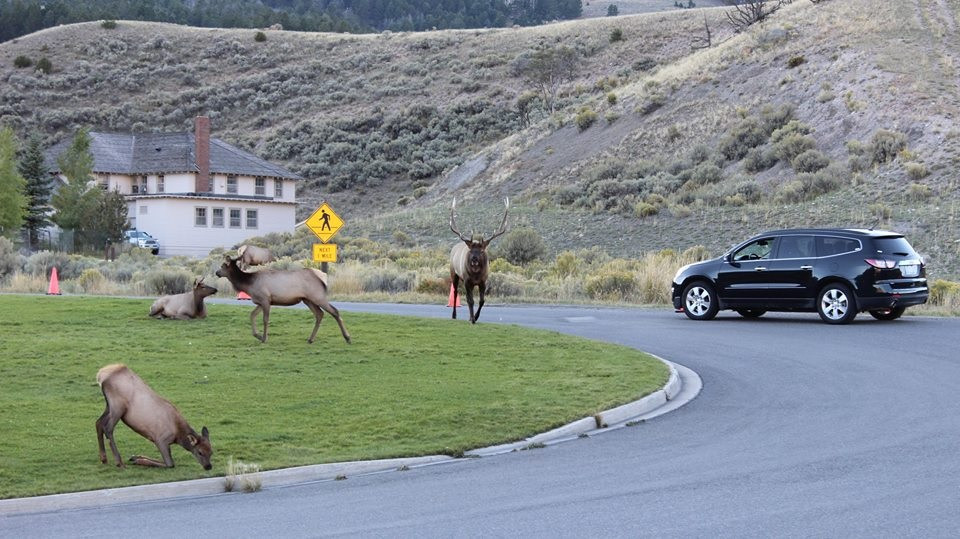 Yellowstone: Old and Faithfully Cheap