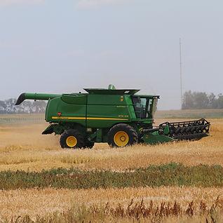 Combine Harvester in Grain Field