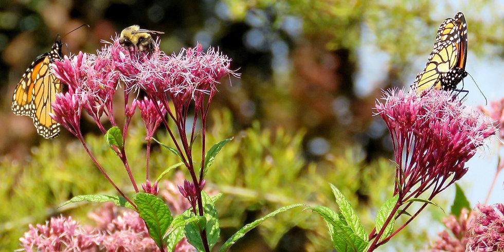 birdsandbees.jpg