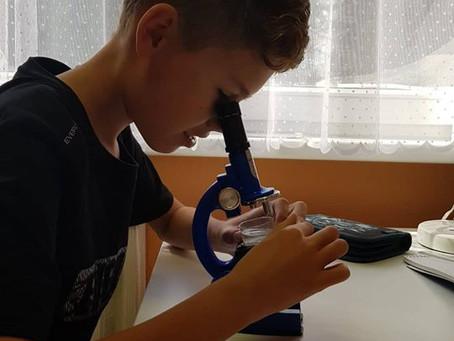 Megfigyelések mikroszkóppal