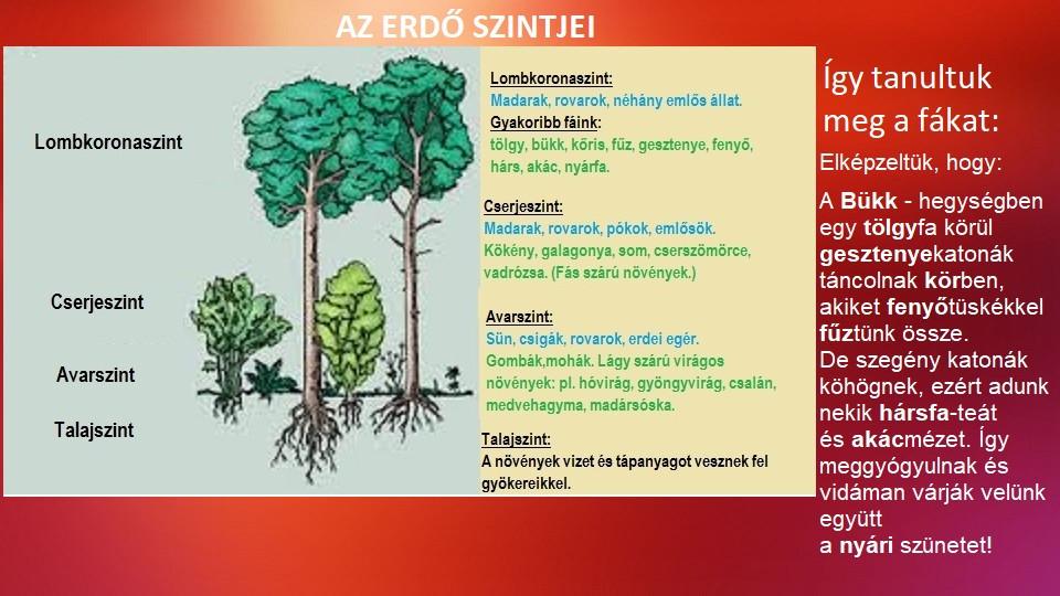 erdőszintek.jpg