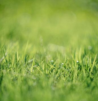 green%20grass%20closeup%20photographr_ed