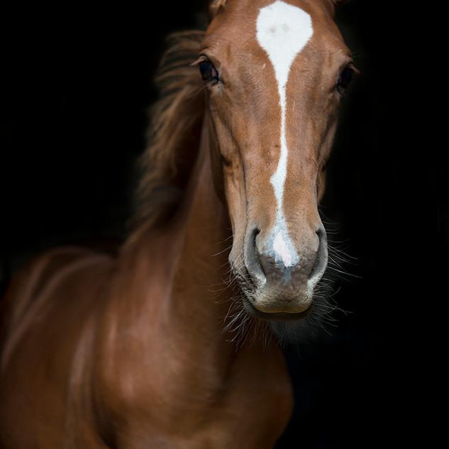 Baby Horse.