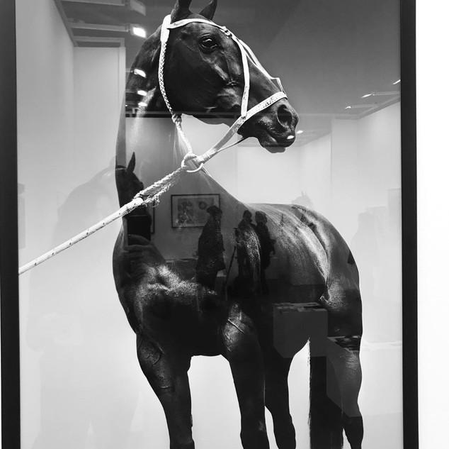La Cuartetera polo horse.