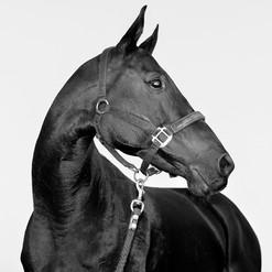 Eterna Polo Horse.
