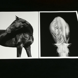 Fine art print on Hahnemühle paper.