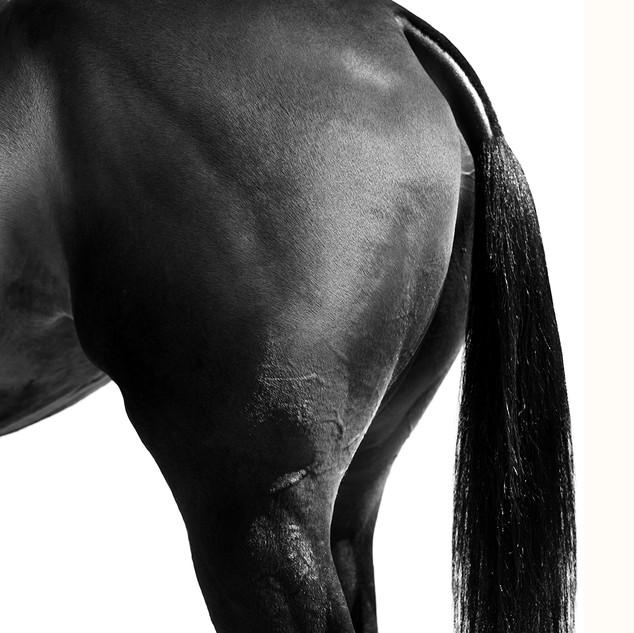Polo Pony Tail.