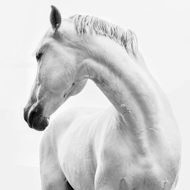 Majestic neck turn.