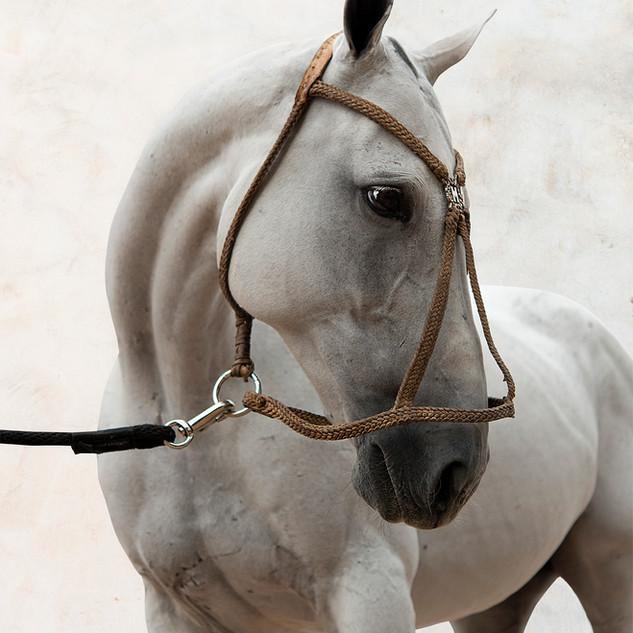 Open Camisa polo horse.