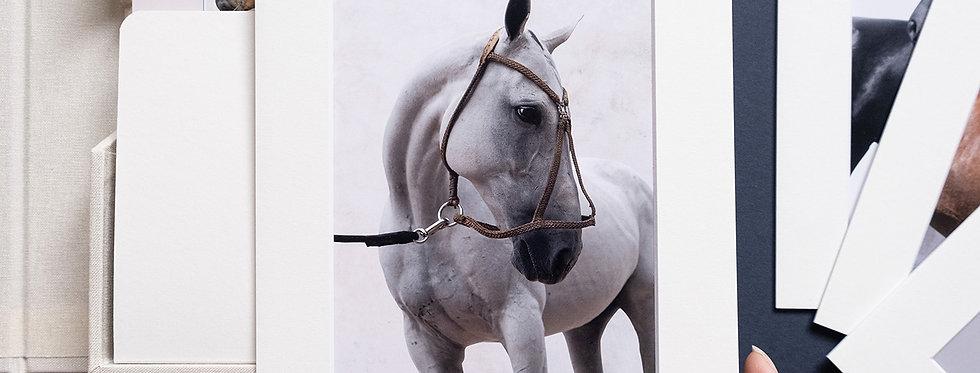POLO HORSE COLLECTION BOX