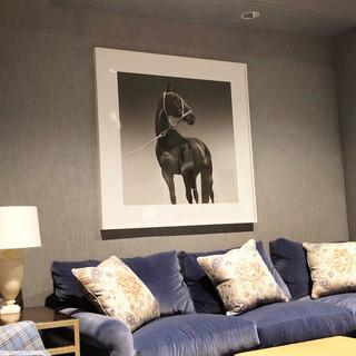 Portrait of Cuartetera polo horse.