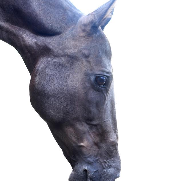 Garota polo horse.