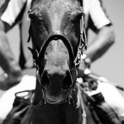 Horse Referee.