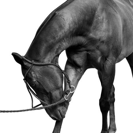 Tetera Polo Horse.