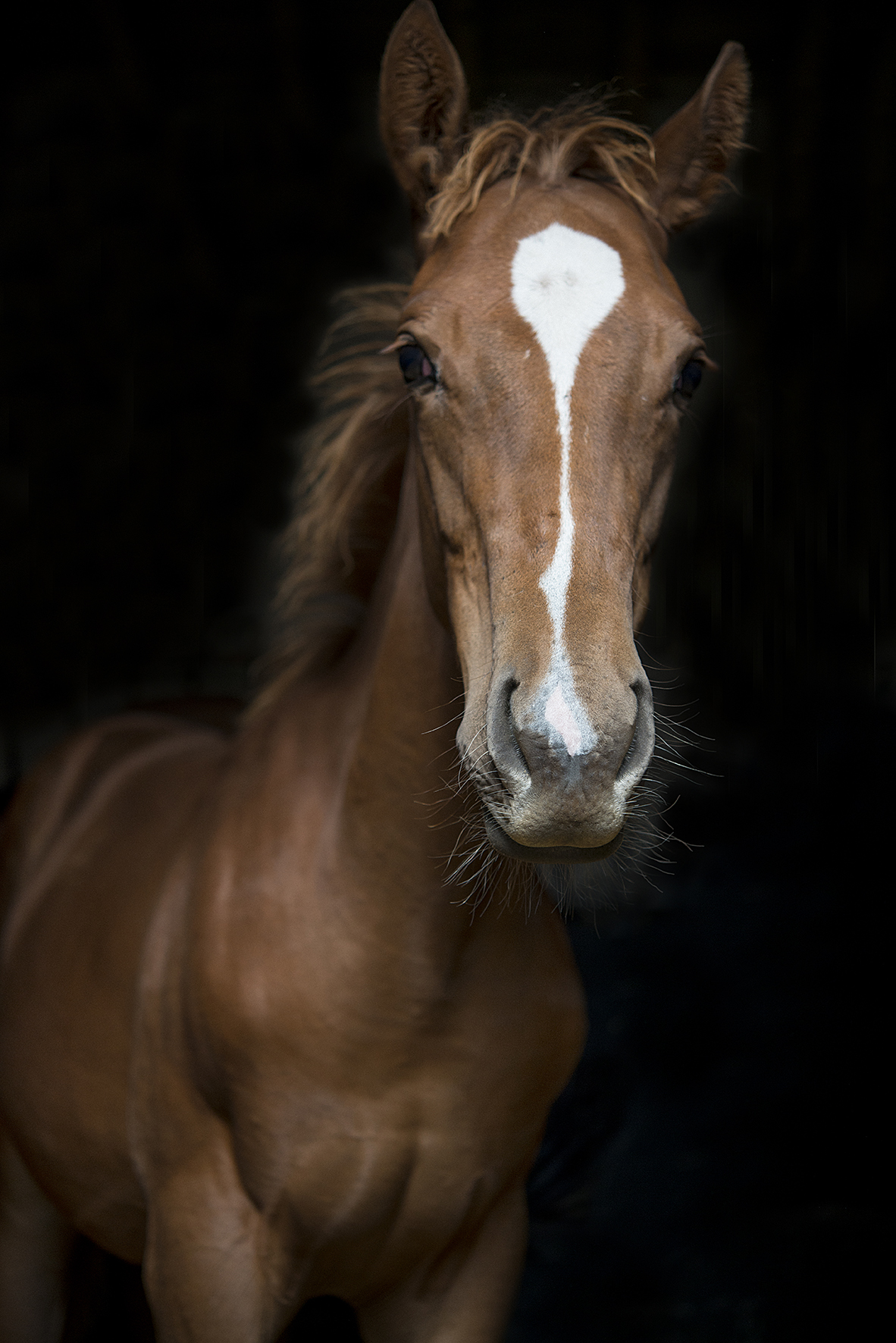 Portrait of baby horse
