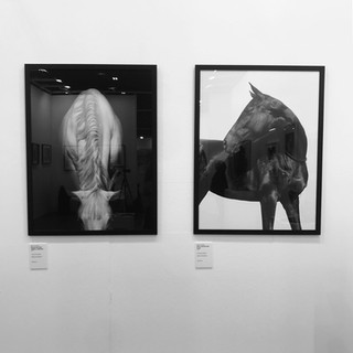 From exhibition at Art Cavallo, Horse Fair in Verona.