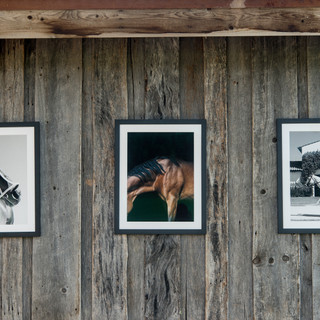 Exhibition of photos from Horse Collection.