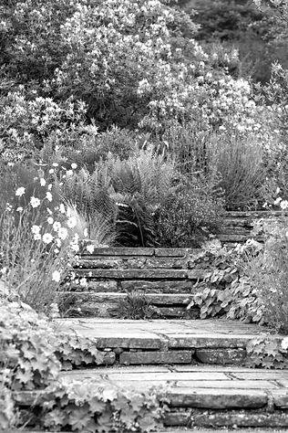 escalier%20jardin%202_edited.jpg