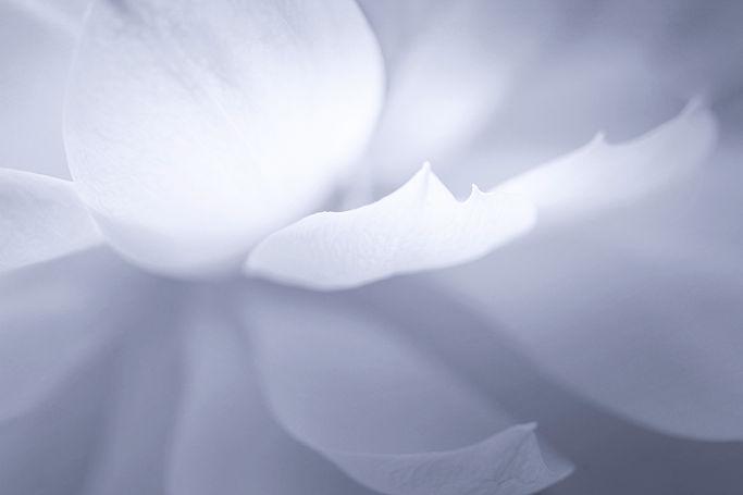 The Lotus Flame_edited_edited_edited_edited.jpg