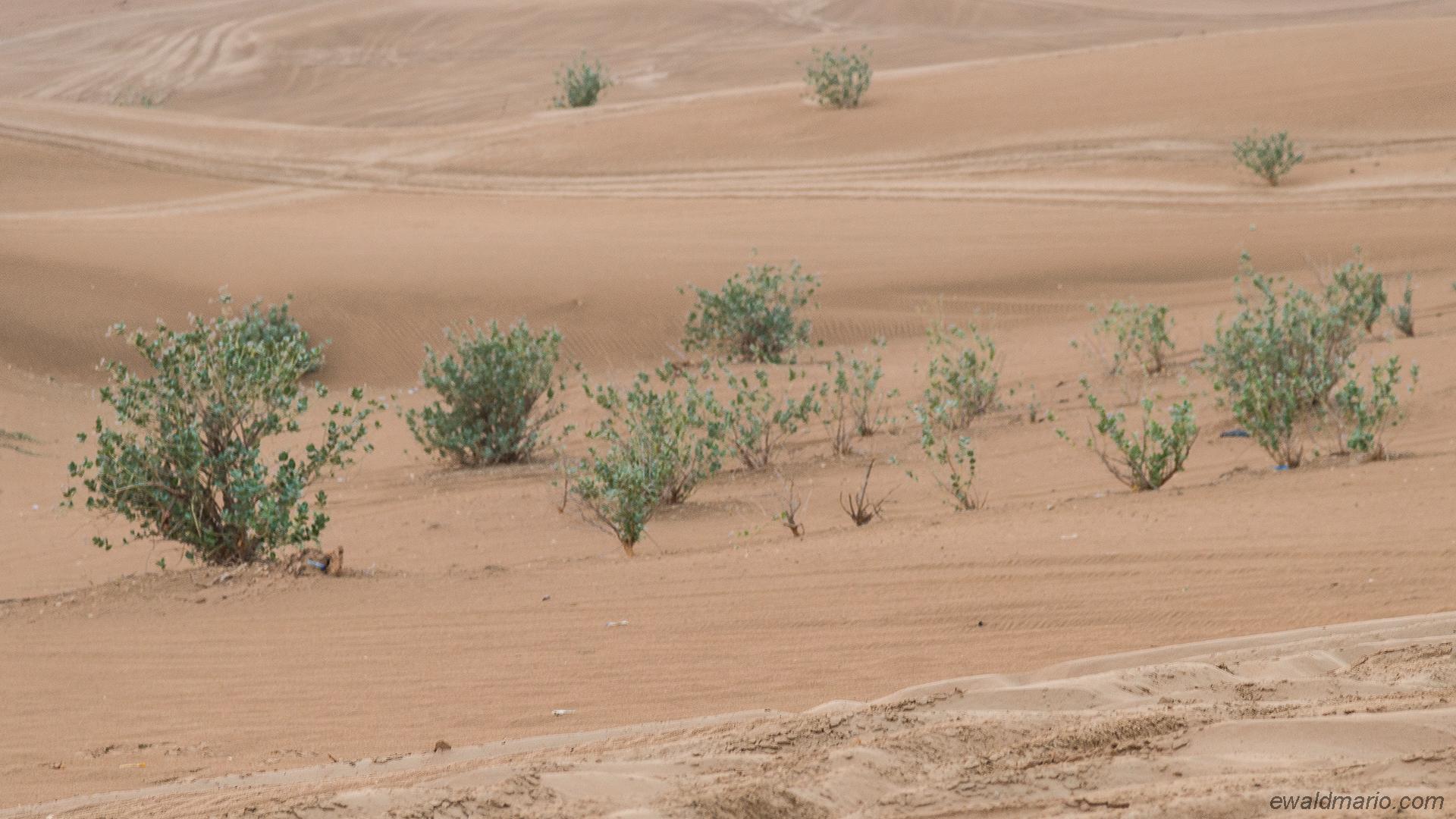 uae-801_desert-safari