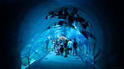 uae-112_dubai_aquarium
