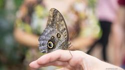 uae-746_butterfly-world